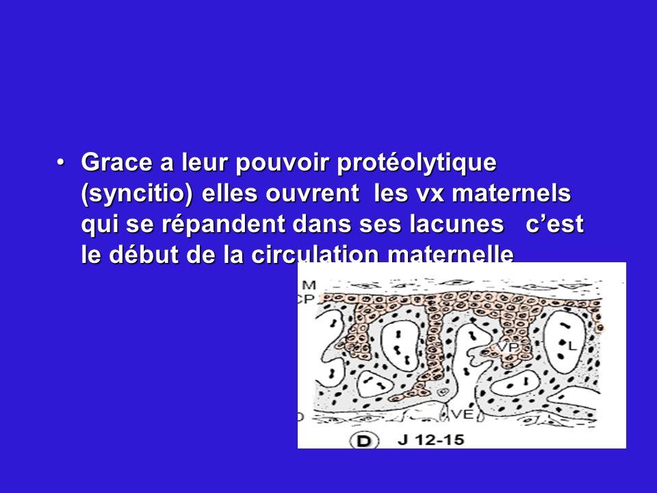 Grace a leur pouvoir protéolytique (syncitio) elles ouvrent les vx maternels qui se répandent dans ses lacunes cest le début de la circulation materne