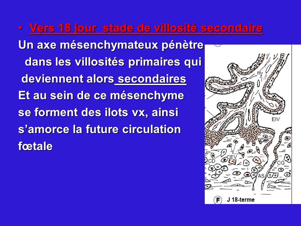 Vers 18 jour stade de villosité secondaireVers 18 jour stade de villosité secondaire Un axe mésenchymateux pénètre dans les villosités primaires qui d