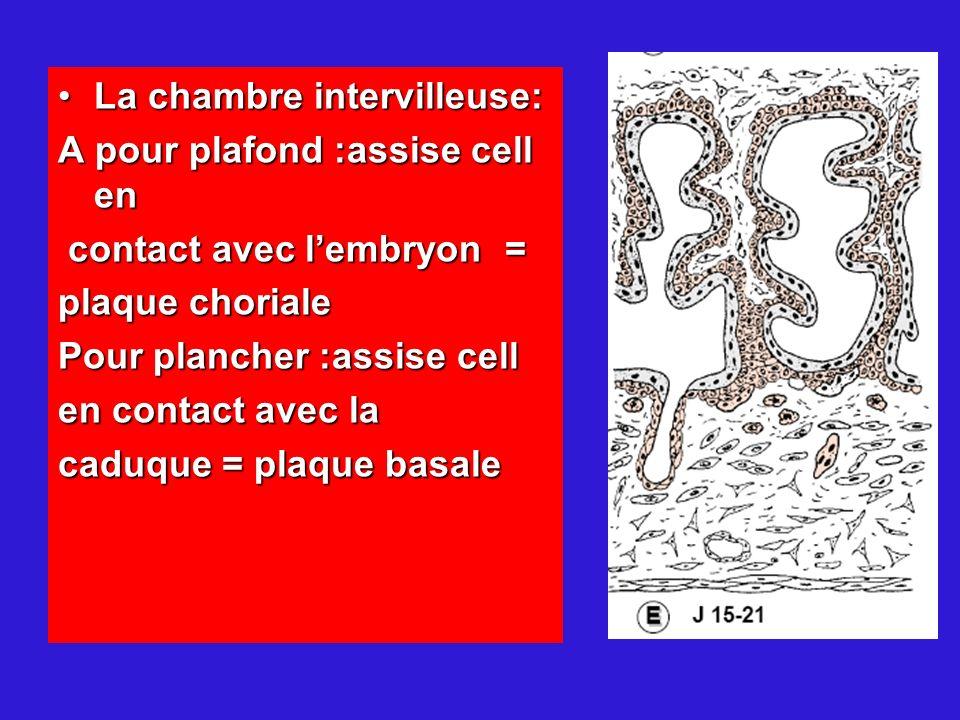 La chambre intervilleuse:La chambre intervilleuse: A pour plafond :assise cell en contact avec lembryon = contact avec lembryon = plaque choriale Pour