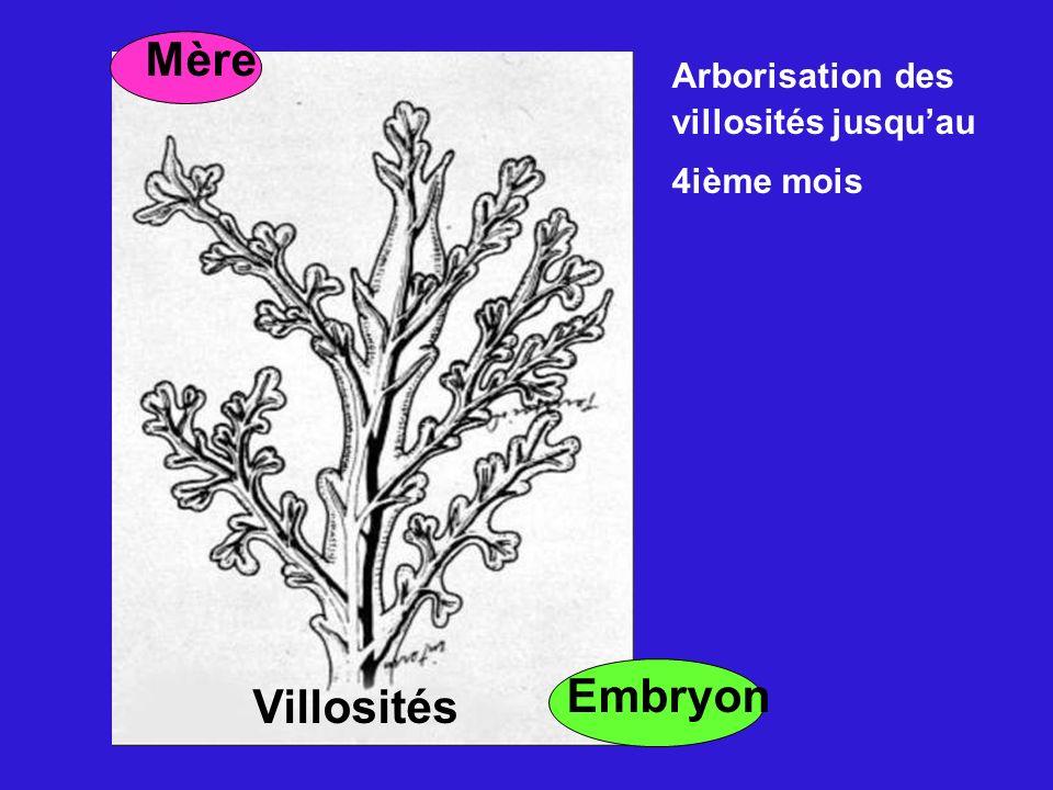 Mère Embryon Villosités Arborisation des villosités jusquau 4ième mois