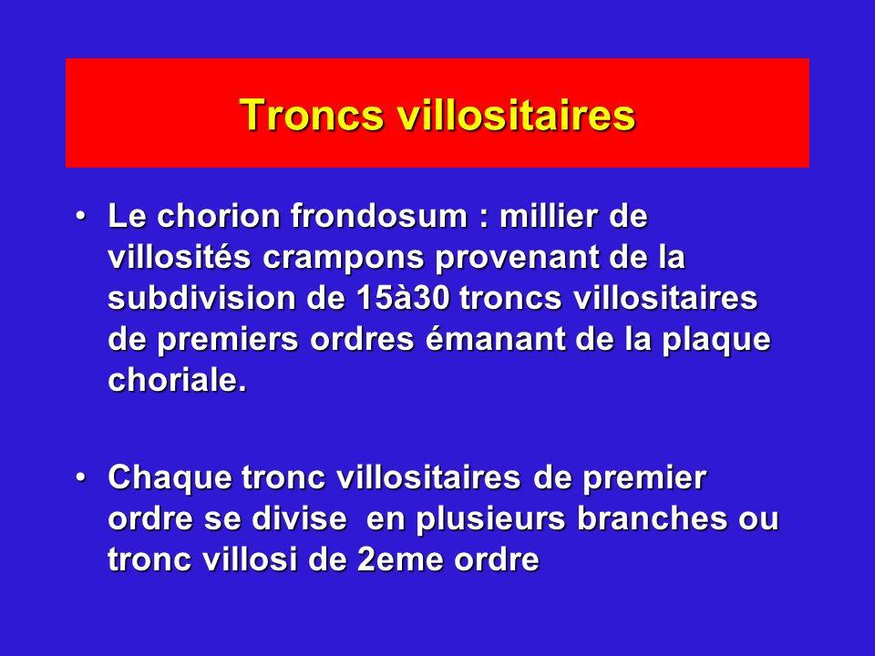 Troncs villositaires Le chorion frondosum : millier de villosités crampons provenant de la subdivision de 15à30 troncs villositaires de premiers ordre