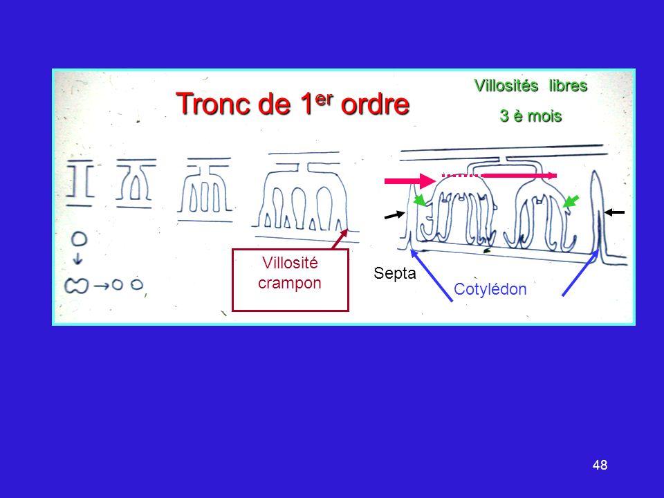 48 Septa Tronc de 1 er ordre Villosité crampon Villosités libres 3 è mois Cotylédon
