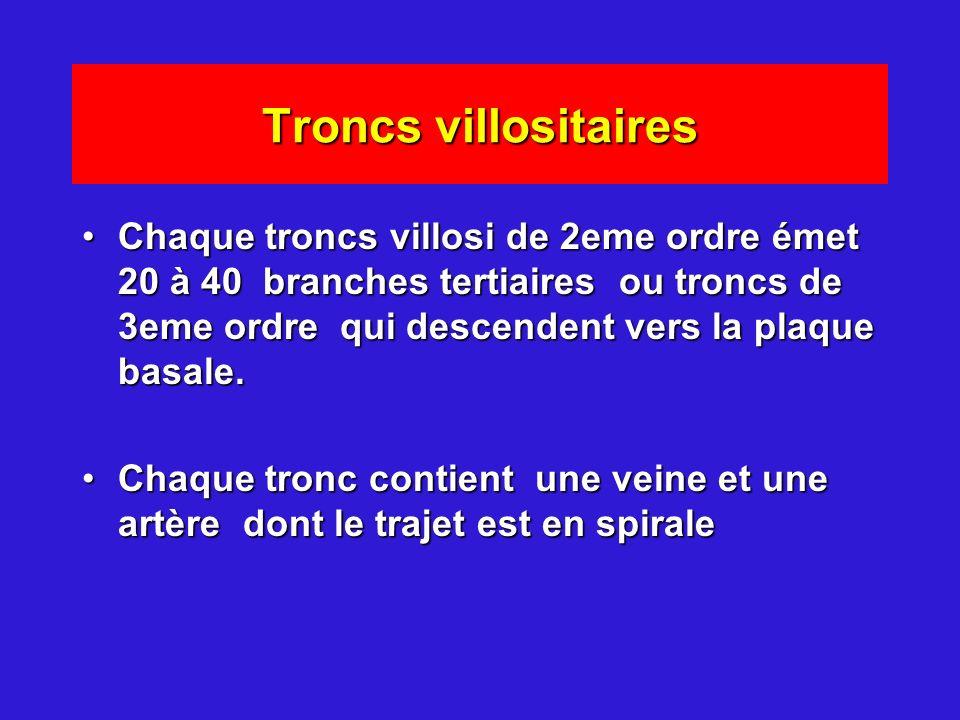 Troncs villositaires Chaque troncs villosi de 2eme ordre émet 20 à 40 branches tertiaires ou troncs de 3eme ordre qui descendent vers la plaque basale