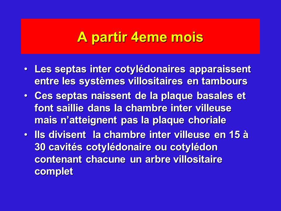 A partir 4eme mois Les septas inter cotylédonaires apparaissent entre les systèmes villositaires en tamboursLes septas inter cotylédonaires apparaisse