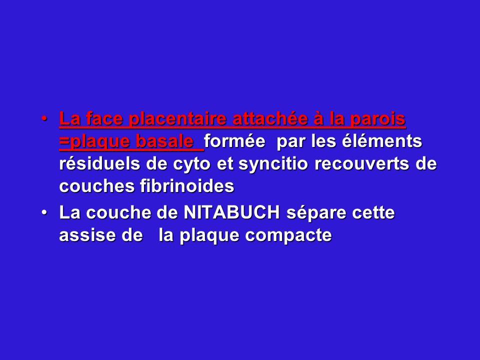 La face placentaire attachée à la parois =plaque basale formée par les éléments résiduels de cyto et syncitio recouverts de couches fibrinoidesLa face