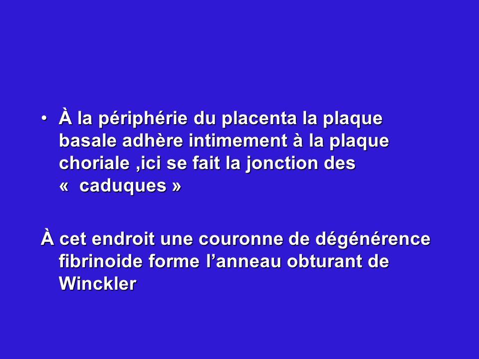 À la périphérie du placenta la plaque basale adhère intimement à la plaque choriale,ici se fait la jonction des « caduques »À la périphérie du placent