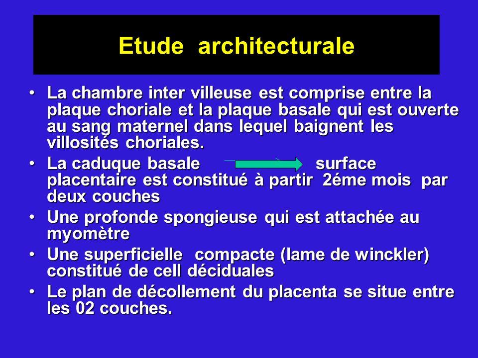 Etude architecturale La chambre inter villeuse est comprise entre la plaque choriale et la plaque basale qui est ouverte au sang maternel dans lequel