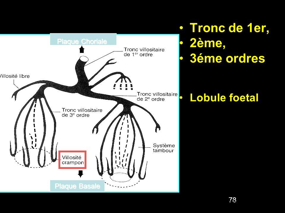 Tronc de 1er, 2ème, 3éme ordres Lobule foetal : ensemble de villosités issues d un même tronc de 1er ordre 78 Embryologie Humaine Abrégé Masson,3°Ed P