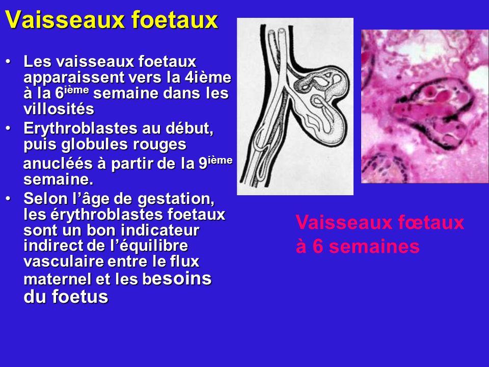 Vaisseaux foetaux Les vaisseaux foetaux apparaissent vers la 4ième à la 6 ième semaine dans les villositésLes vaisseaux foetaux apparaissent vers la 4