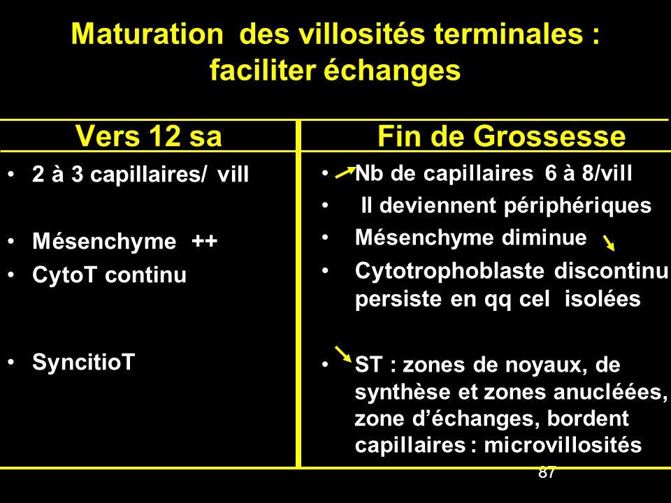 Maturation des villosités terminales : faciliter échanges Vers 12 sa 2 à 3 capillaires/ vill2 à 3 capillaires/ vill Mésenchyme ++Mésenchyme ++ CytoT c