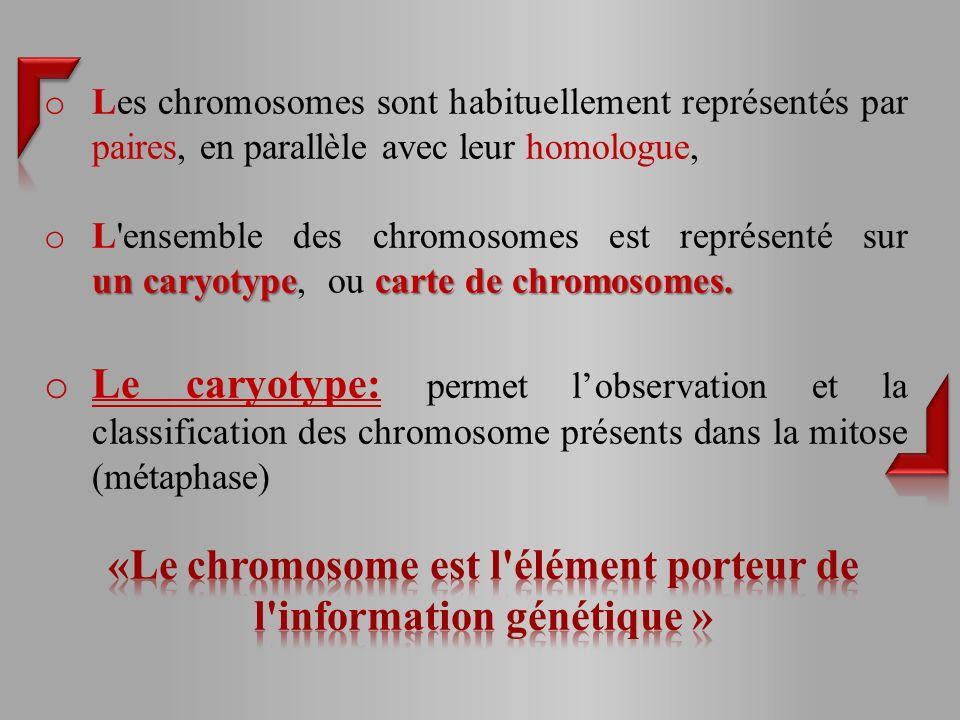 o Les chromosomes sont habituellement représentés par paires, en parallèle avec leur homologue, un caryotypecarte de chromosomes.