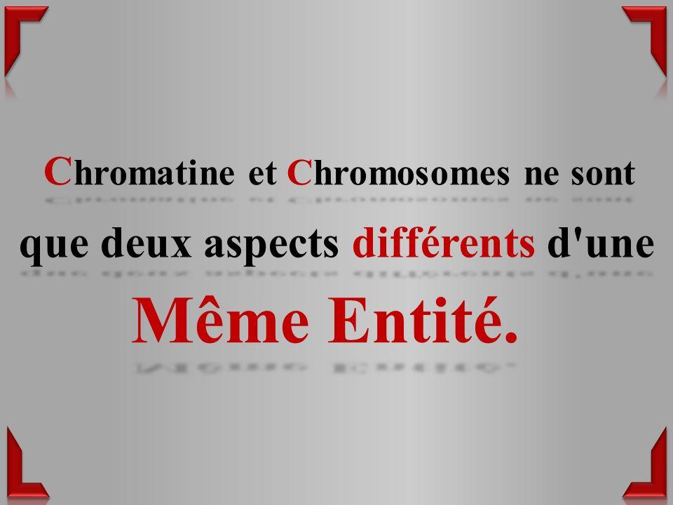 C hromatine et Chromosomes ne sont Même Entité. que deux aspects différents d une