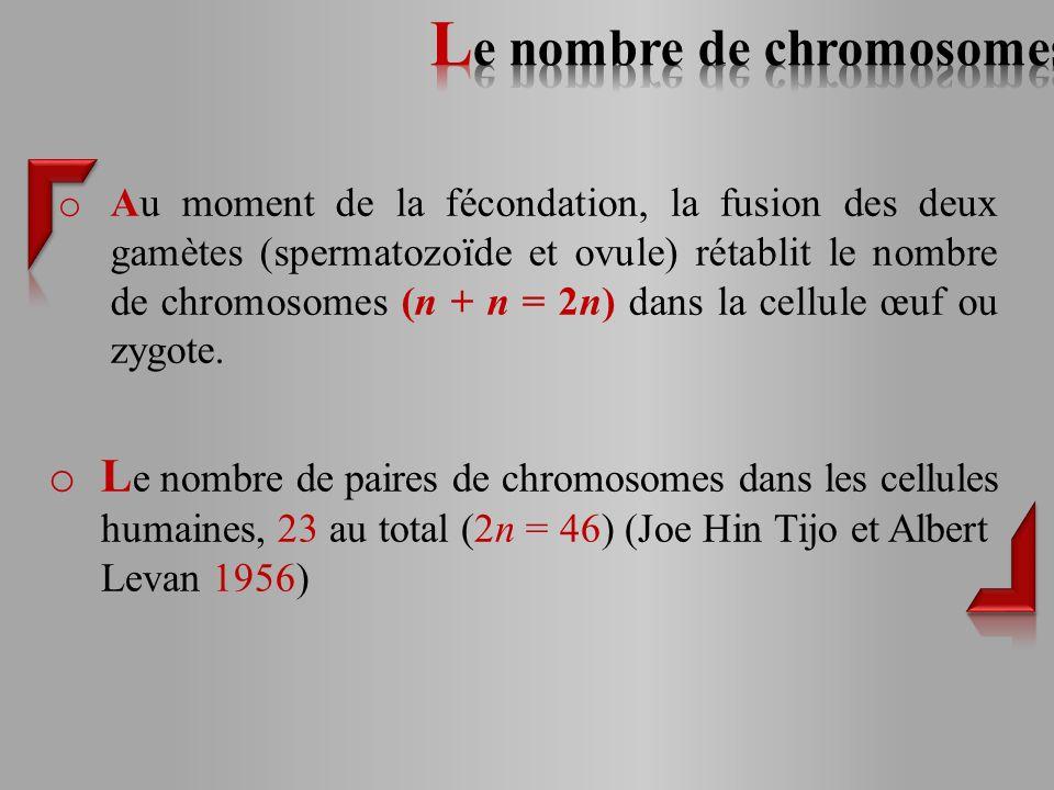o Au moment de la fécondation, la fusion des deux gamètes (spermatozoïde et ovule) rétablit le nombre de chromosomes (n + n = 2n) dans la cellule œuf ou zygote.