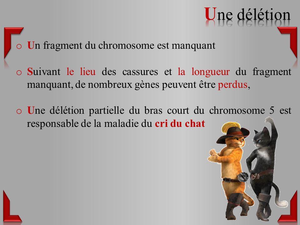 o Un fragment du chromosome est manquant o Suivant le lieu des cassures et la longueur du fragment manquant, de nombreux gènes peuvent être perdus, o Une délétion partielle du bras court du chromosome 5 est responsable de la maladie du cri du chat