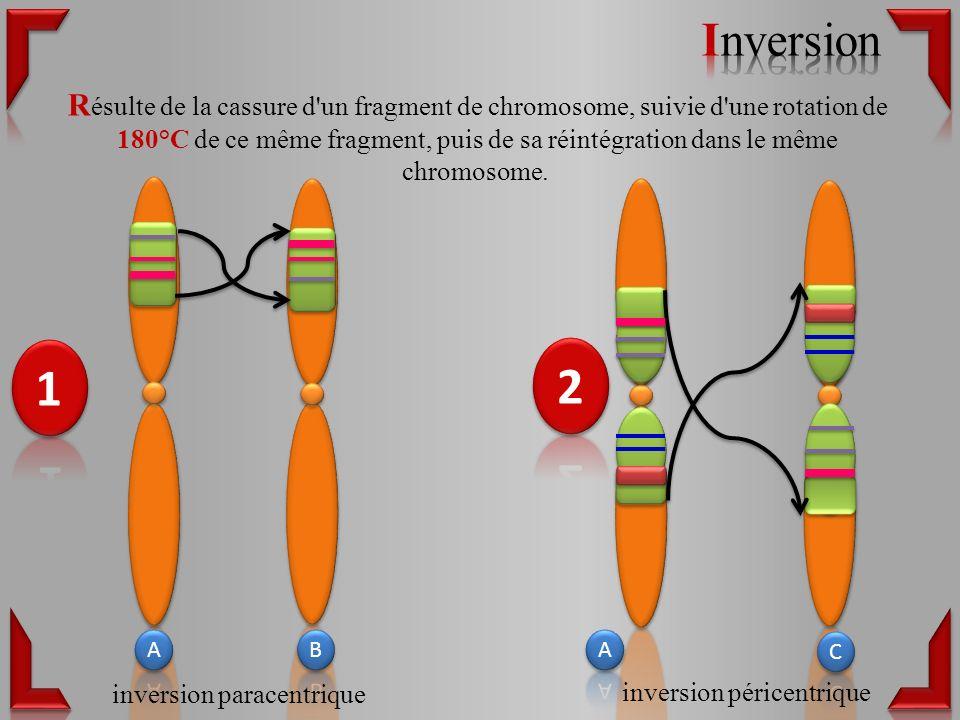 R ésulte de la cassure d un fragment de chromosome, suivie d une rotation de 180°C de ce même fragment, puis de sa réintégration dans le même chromosome.