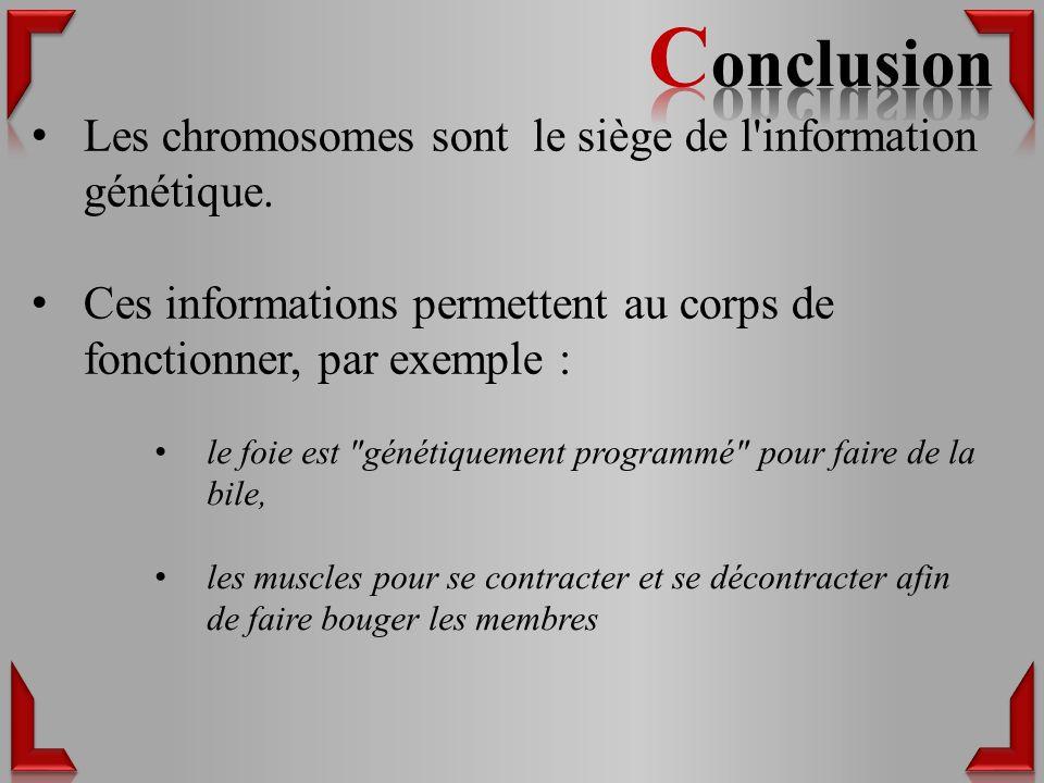Les chromosomes sont le siège de l information génétique.