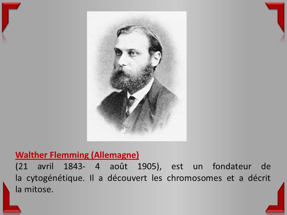 Walther Flemming (Allemagne) (21 avril 1843- 4 août 1905), est un fondateur de la cytogénétique.