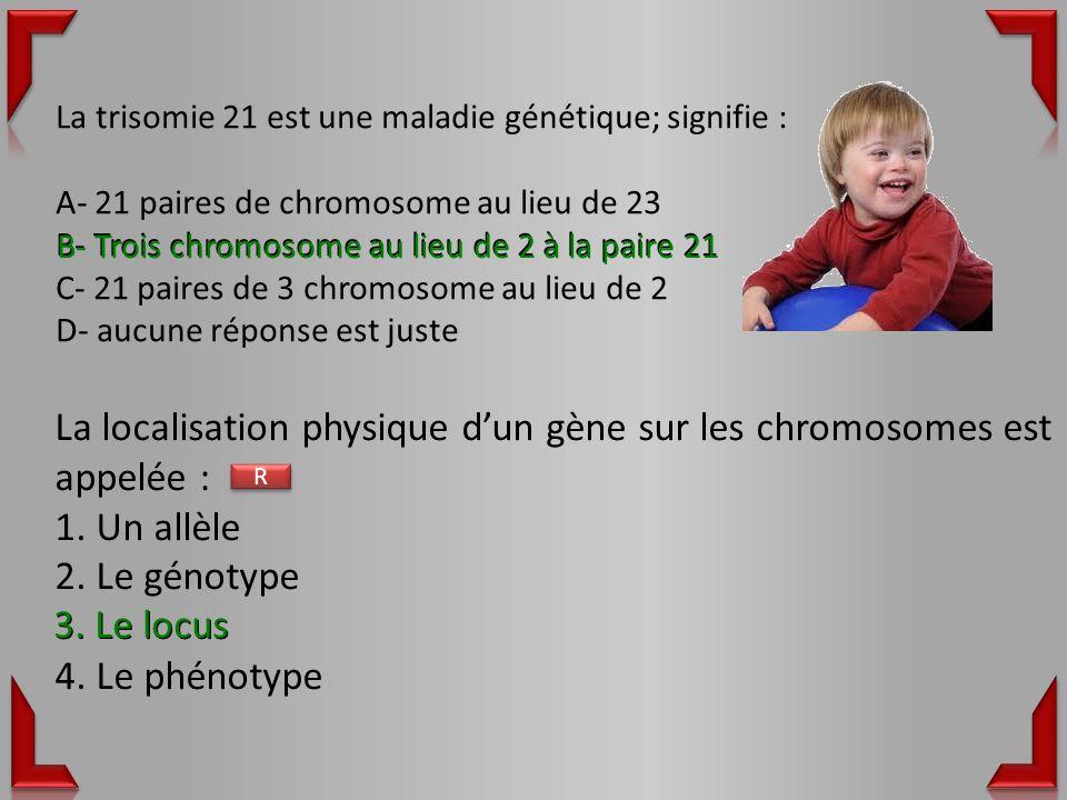 La trisomie 21 est une maladie génétique; signifie : A- 21 paires de chromosome au lieu de 23 B- Trois chromosome au lieu de 2 à la paire 21 C- 21 paires de 3 chromosome au lieu de 2 D- aucune réponse est juste La localisation physique dun gène sur les chromosomes est appelée : 1.