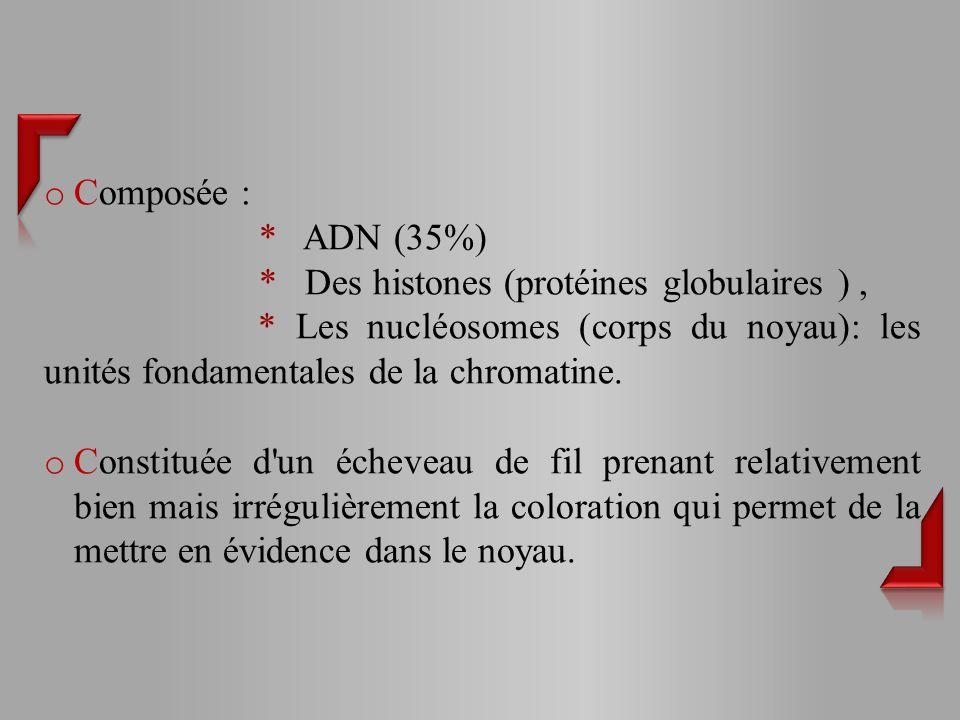 o Composée : * ADN (35%) * Des histones (protéines globulaires ), * Les nucléosomes (corps du noyau): les unités fondamentales de la chromatine.