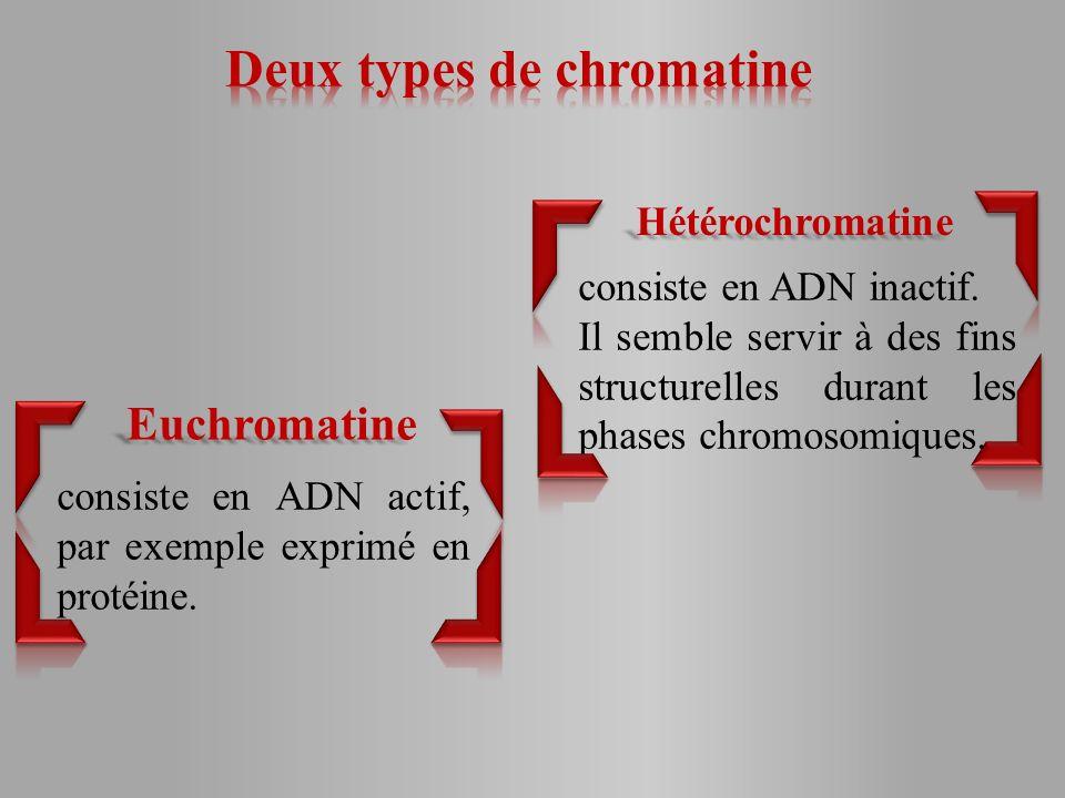 consiste en ADN actif, par exemple exprimé en protéine.