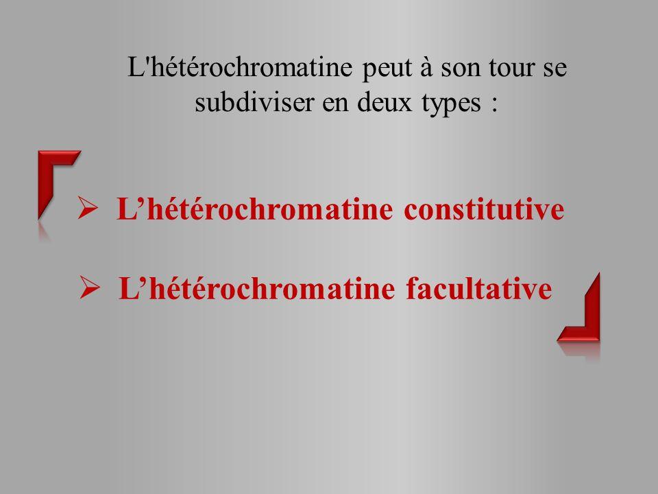 L hétérochromatine peut à son tour se subdiviser en deux types : Lhétérochromatine constitutive Lhétérochromatine facultative