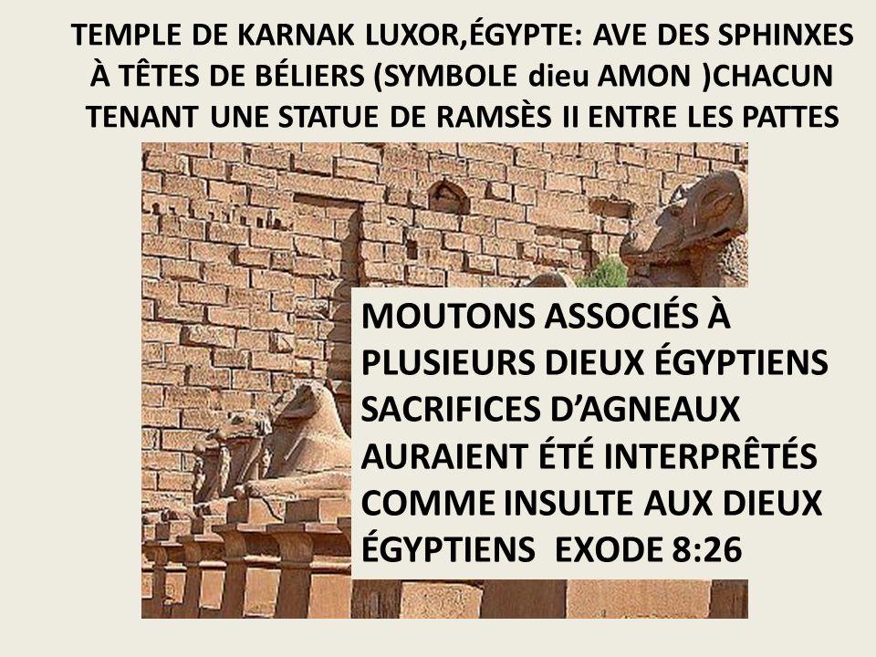 TEMPLE DE KARNAK LUXOR,ÉGYPTE: AVE DES SPHINXES À TÊTES DE BÉLIERS (SYMBOLE dieu AMON )CHACUN TENANT UNE STATUE DE RAMSÈS II ENTRE LES PATTES MOUTONS