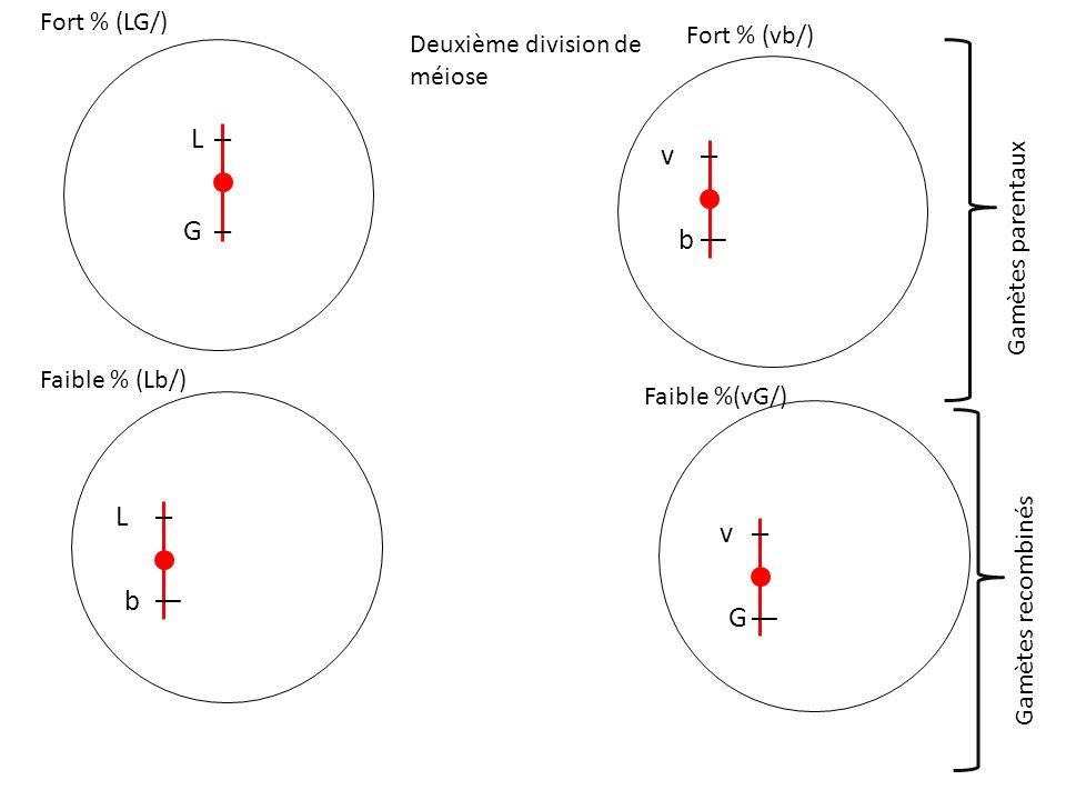 L G Deuxième division de méiose L b v G v b Fort % (LG/) Faible % (Lb/) Fort % (vb/) Faible %(vG/) Gamètes parentauxGamètes recombinés