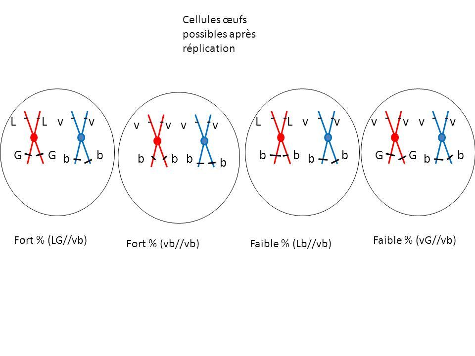 Lv G b b vL G Fort % (LG//vb) Fort % (vb//vb)Faible % (Lb//vb) Faible % (vG//vb) Cellules œufs possibles après réplication vv b vv bb b Lv b b b vL b vv G b b vv G