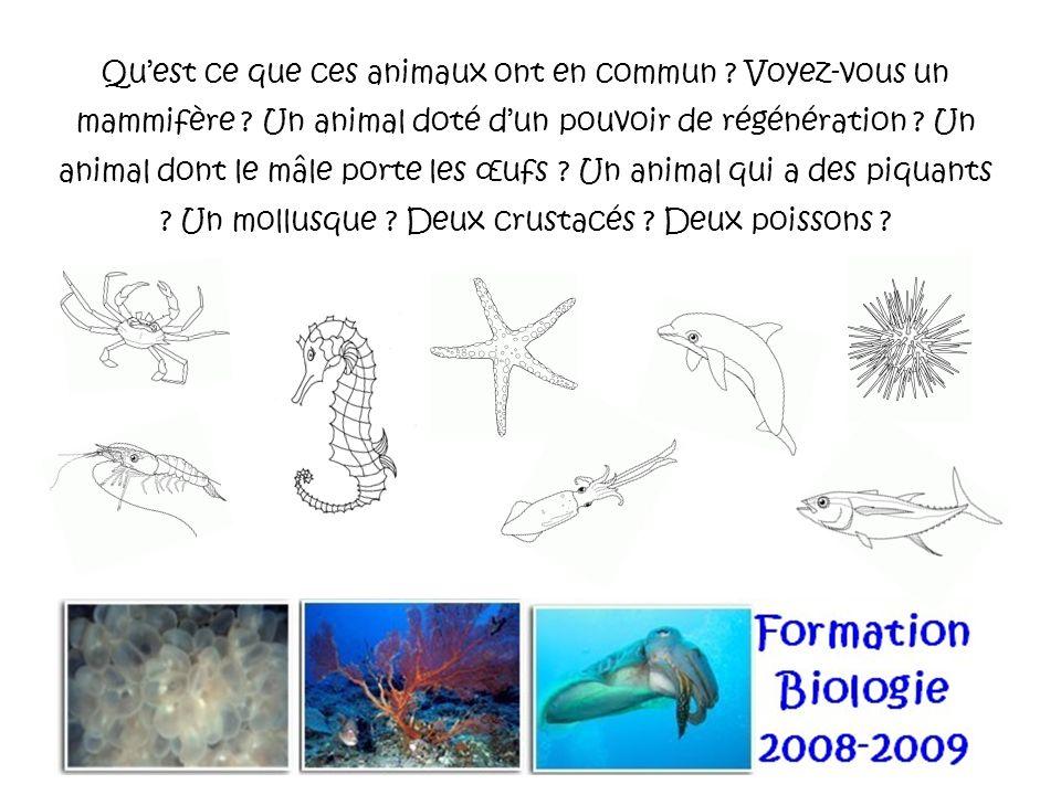 Quest ce que ces animaux ont en commun ? Voyez-vous un mammifère ? Un animal doté dun pouvoir de régénération ? Un animal dont le mâle porte les œufs