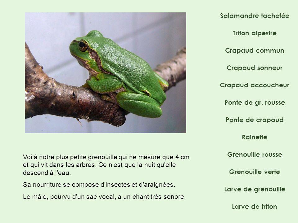 Salamandre tachetée Crapaud commun Crapaud sonneur Ponte de gr. rousse Crapaud accoucheur Rainette Grenouille rousse Grenouille verte Triton alpestre