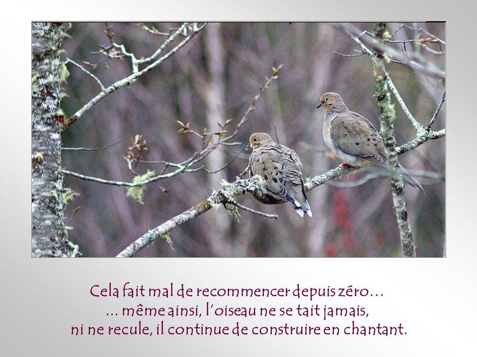 Parfois – très souvent avant que naissent les oisillons -, un animal, un enfant, une tempête détruit une fois de plus le nid, mais cette fois avec son