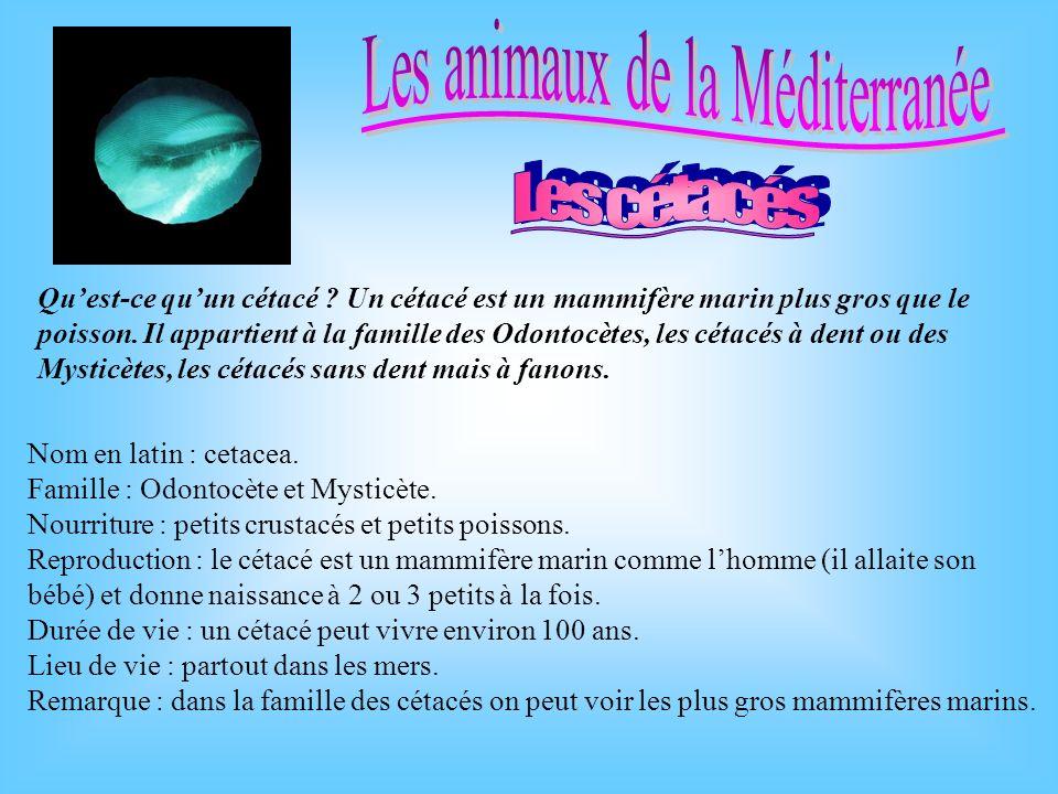 Nom en latin : cetacea.Famille : Odontocète et Mysticète.