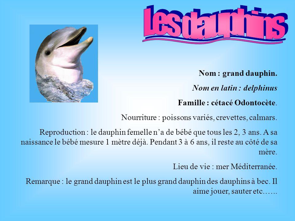 Nom : grand dauphin.Nom en latin : delphinus Famille : cétacé Odontocète.