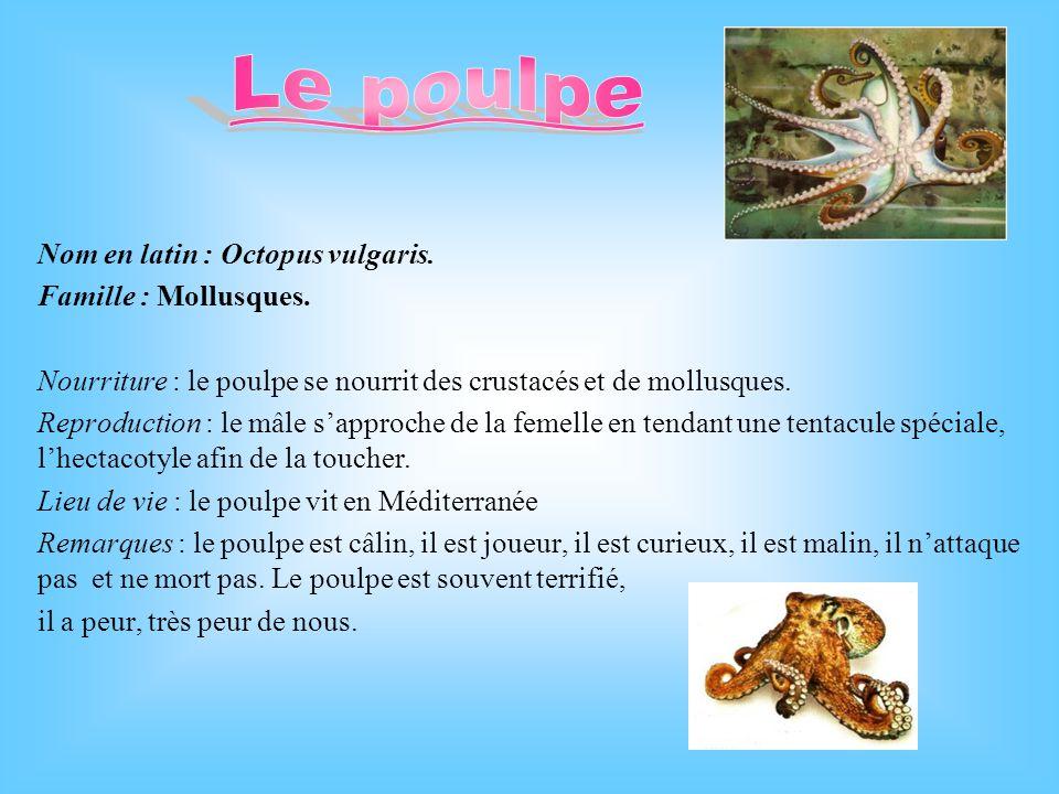Nom latin : Echinaster sepositus Famille : Echinodermes Nourriture : des bivalves Reproduction : Il existe des étoiles de mer femelle et mâle.