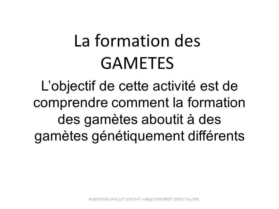 La formation des GAMETES M.BESSOUD-CAVILLOT, prof SVT, collège CONDORCET, 38210 TULLINS Lobjectif de cette activité est de comprendre comment la forma