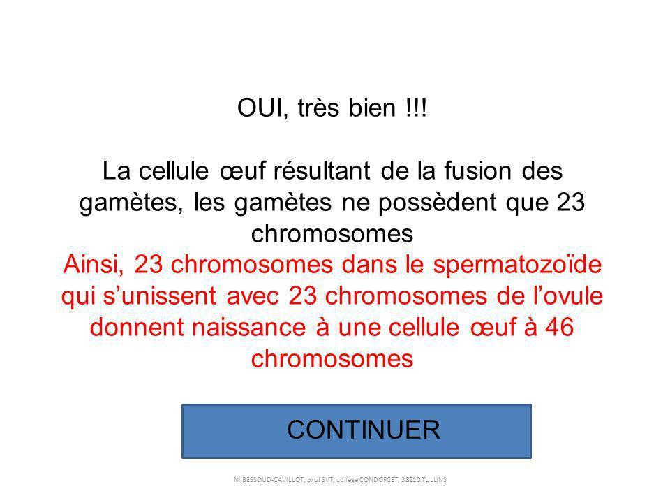 OUI, très bien !!! La cellule œuf résultant de la fusion des gamètes, les gamètes ne possèdent que 23 chromosomes Ainsi, 23 chromosomes dans le sperma