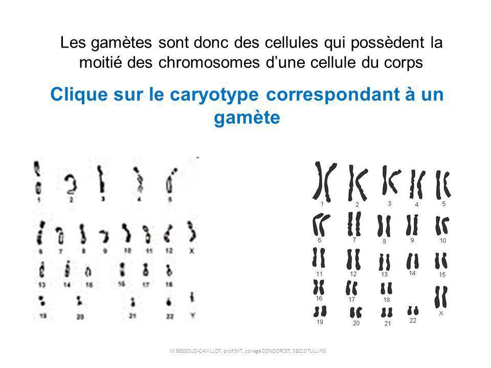Les gamètes sont donc des cellules qui possèdent la moitié des chromosomes dune cellule du corps Clique sur le caryotype correspondant à un gamète M.B