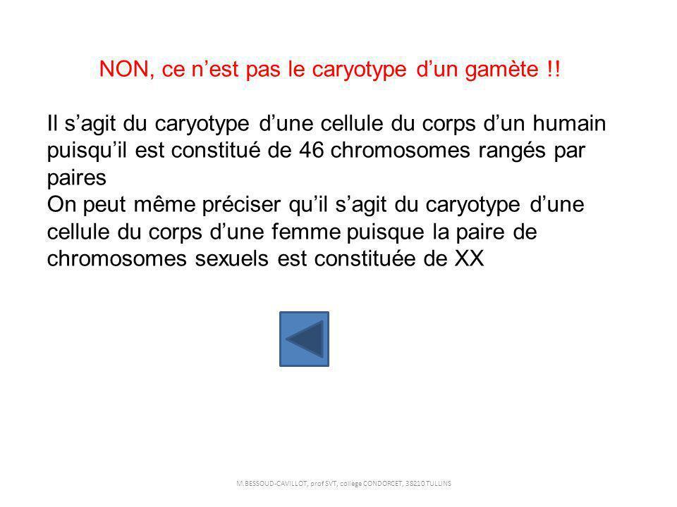NON, ce nest pas le caryotype dun gamète !! Il sagit du caryotype dune cellule du corps dun humain puisquil est constitué de 46 chromosomes rangés par