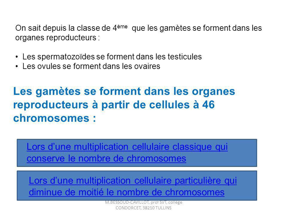 On sait depuis la classe de 4 ème que les gamètes se forment dans les organes reproducteurs : Les spermatozoïdes se forment dans les testicules Les ov