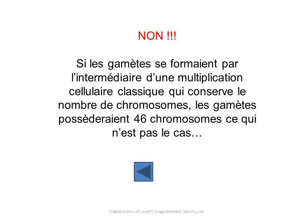 NON !!! Si les gamètes se formaient par lintermédiaire dune multiplication cellulaire classique qui conserve le nombre de chromosomes, les gamètes pos