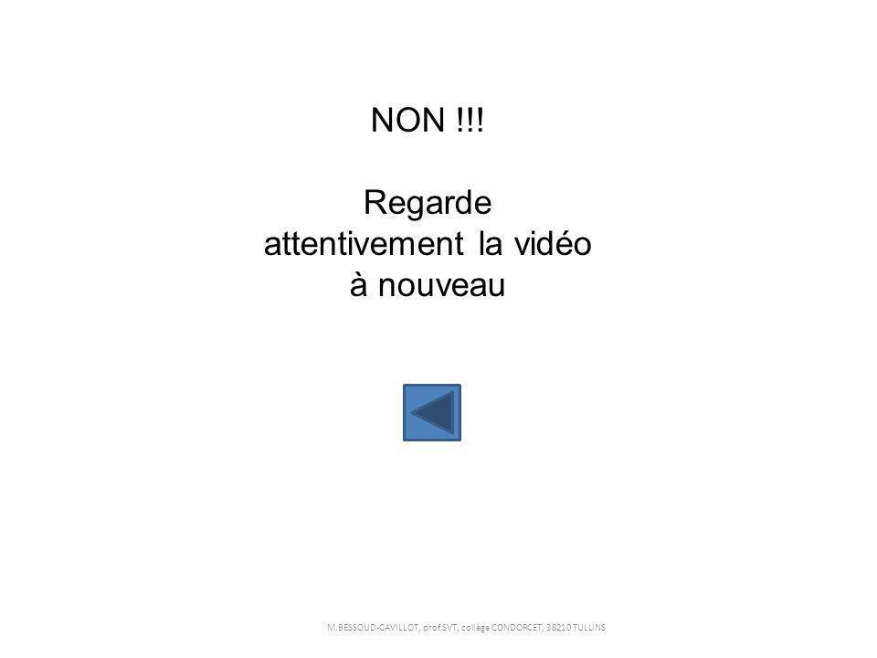 NON !!! Regarde attentivement la vidéo à nouveau M.BESSOUD-CAVILLOT, prof SVT, collège CONDORCET, 38210 TULLINS