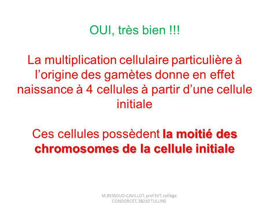 OUI, très bien !!! La multiplication cellulaire particulière à lorigine des gamètes donne en effet naissance à 4 cellules à partir dune cellule initia