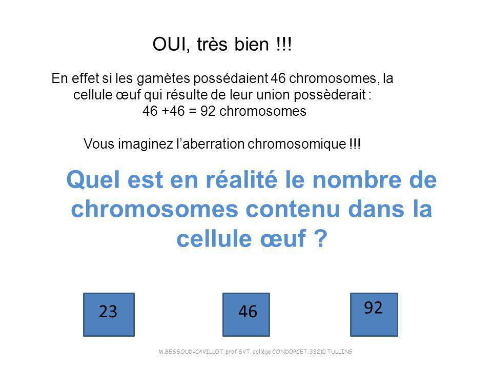 OUI, très bien !!! En effet si les gamètes possédaient 46 chromosomes, la cellule œuf qui résulte de leur union possèderait : 46 +46 = 92 chromosomes