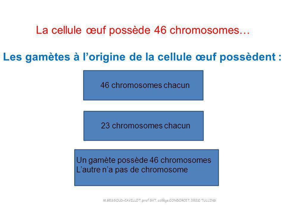 La cellule œuf possède 46 chromosomes… Les gamètes à lorigine de la cellule œuf possèdent : 46 chromosomes chacun 23 chromosomes chacun Un gamète poss