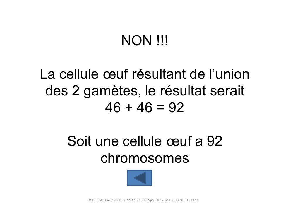 NON !!! La cellule œuf résultant de lunion des 2 gamètes, le résultat serait 46 + 46 = 92 Soit une cellule œuf a 92 chromosomes M.BESSOUD-CAVILLOT, pr