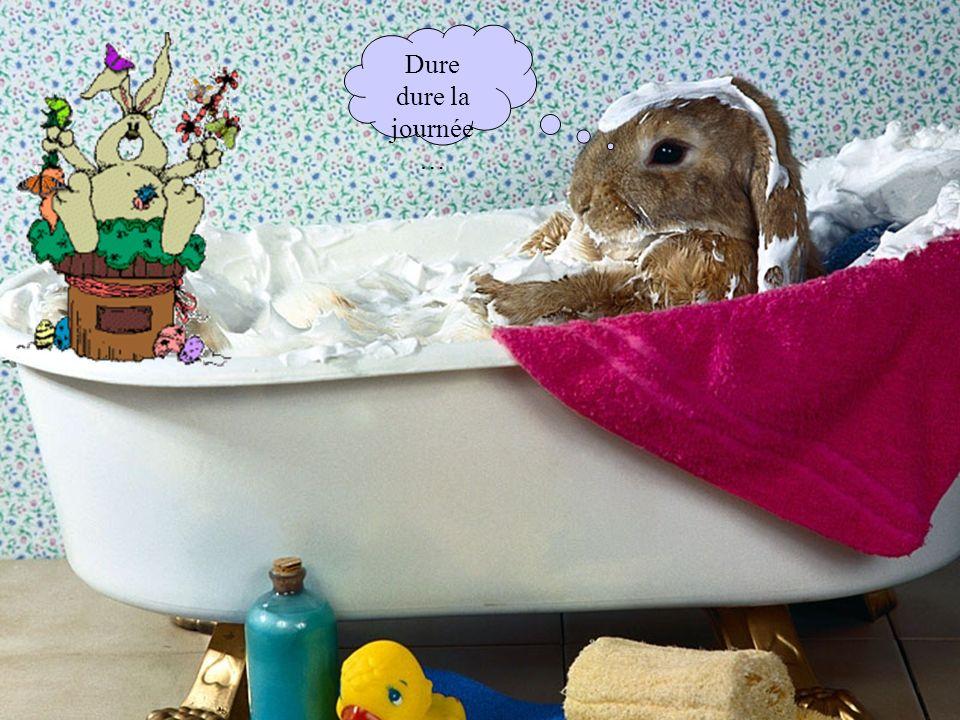 Si les oeufs de Pâques sont apportés par des lapins, il ne faut pas être surpris en Allemagne de découvrir une poule au Tyrol, des coqs en Bavière… et des renards en Thuringe et en Westphalie !