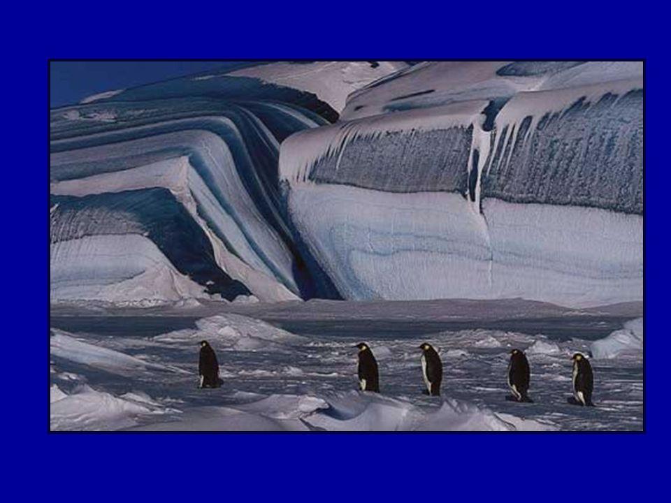 Au mois de mars (automne austral), après avoir reconstitué en mer leurs réserves de graisse après la mue, les manchots, très synchronisés, reviennent