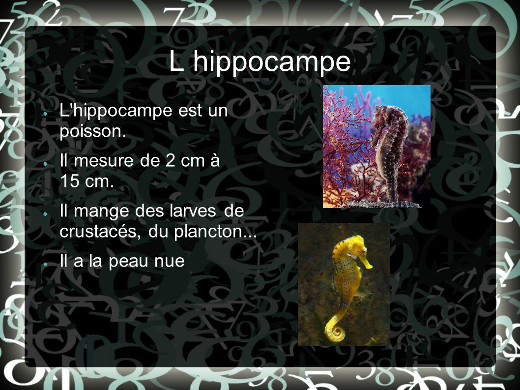 L hippocampe L'hippocampe est un poisson. Il mesure de 2 cm à 15 cm. Il mange des larves de crustacés, du plancton... Il a la peau nue