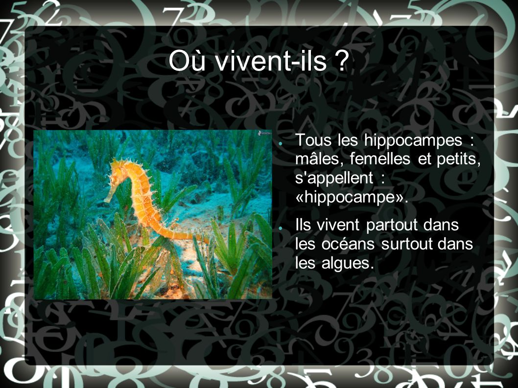 Où vivent-ils ? Tous les hippocampes : mâles, femelles et petits, s'appellent : «hippocampe». Ils vivent partout dans les océans surtout dans les algu