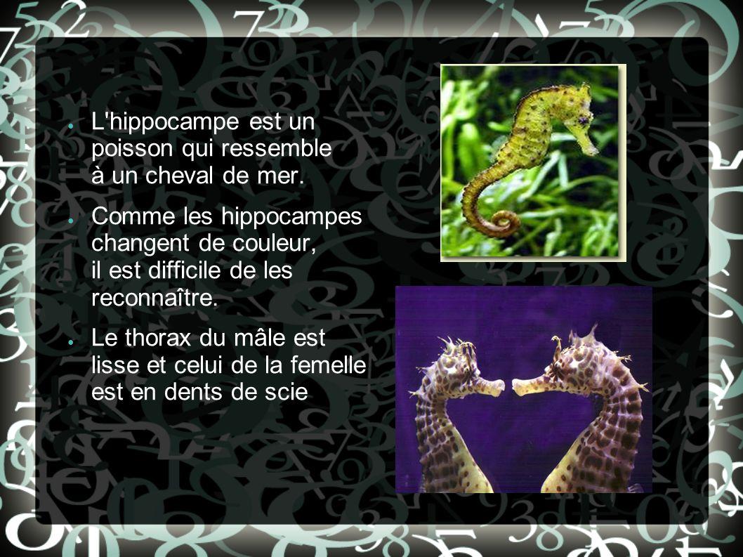 L'hippocampe est un poisson qui ressemble à un cheval de mer. Comme les hippocampes changent de couleur, il est difficile de les reconnaître. Le thora